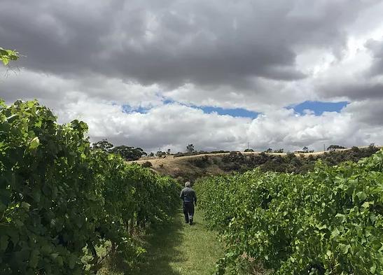 Craiglee vineyard